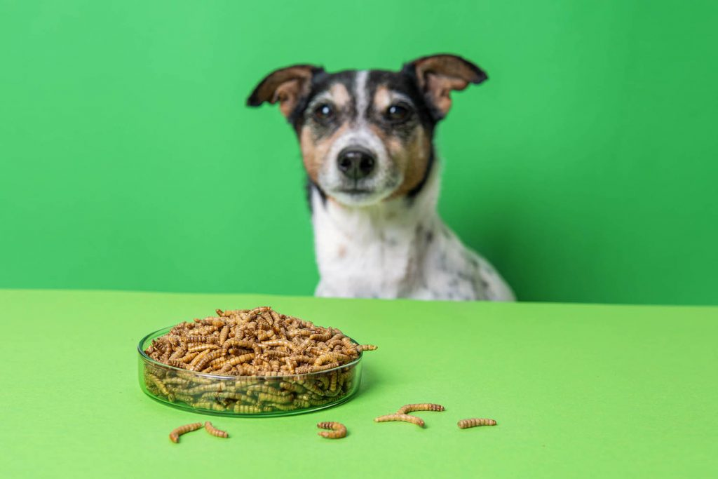 A nice dog looking at a bowl full of insect base food.